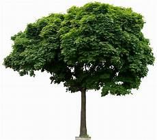 Tree Transparent Background