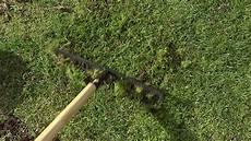 rasen vom moos befreien biologische rasenpflege orf salzburg fernsehen