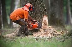 couper un arbre 12261 le fendage de bois et 231 onnage en savoie coupe de bois 224 vos dimensions
