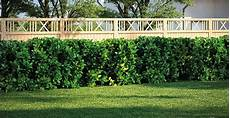 die hecke natuerlicher zaun und heckenpflanze w 228 hlen hecke pflanzen obi gartenplaner