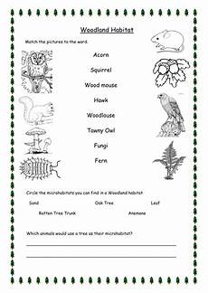 plants habitat worksheets for grade 2 13565 woodland habitat worksheets differentiated by hammondbeth teaching resources tes