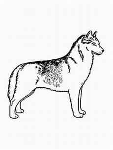 Ausmalbilder Hunde Rottweiler Malvorlagen Hunde Rottweiler Tippsvorlage Info