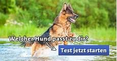 welcher hund passt zu mir test welcher hund passt zu mir