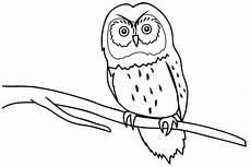 Gambar Mewarnai Burung Anak Tk Paud Dan Sd