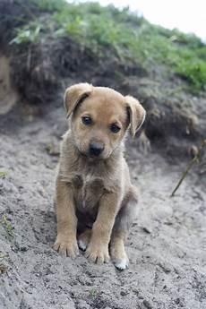 spa mulhouse chien ramener un chien chat ou furet de l 233 tranger dossiers