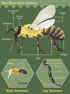 Bagustris Home Mata Lalat Ilhami Imaging 1