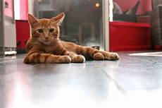 bar à chat grenoble charabica bar 224 chats 224 grenoble cat caf 233 in