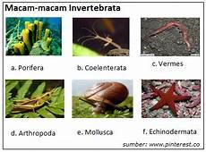 Pengertian Hewan Invertebrata Ciri Fillum Dan Contohnya