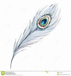 plume de paon d aquarelle illustration de vecteur