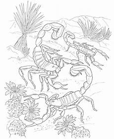 desert animals coloring pages printable 16950 other printable images gallery category page 285 printablee