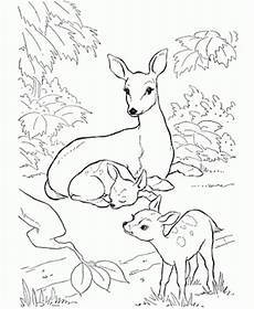 coloring pages of deer bestappsforkids