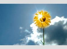 Flowers And Sunshine Wallpapers High Quality   Download Free
