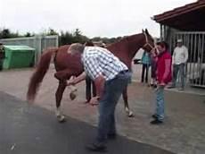 Tamme Hanken Pferd - tamme hanken renkt nicht nur unser pferd ein der