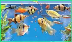 75 Jenis Ikan Hias Informasi Dan Cara Perawatannya