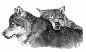 10  Cool Wolf Drawings For Inspiration 2017