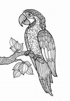 Ausmalbilder Kostenlos Zum Ausdrucken Papageien Papagei Ausmalbilder F 252 R Erwachsene Kostenlos Zum
