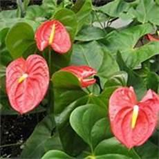 piante da appartamento con fiori bianchi piante da interno con fiore in estate