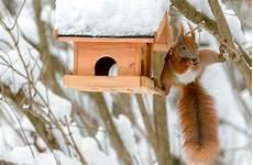 Tiere Brauchen Tiere Im Winter Hilfe Web Wissen