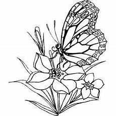 butterfly coloring pages coloring pages