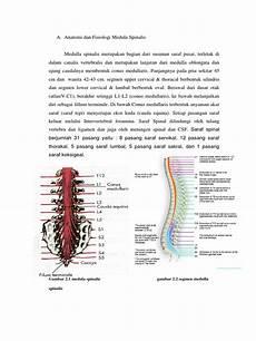 Anatomi Dan Fisiologi Medula Spinalis