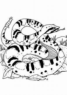 ausmalbilder schlangen 09 ausmalbilder tiere