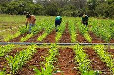 erfolgreiche forschung brasilien will die welt ern 228 hren