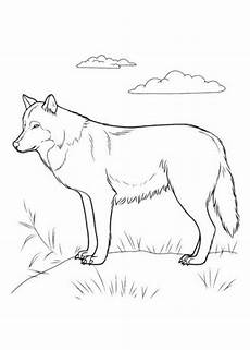 Kostenlose Malvorlagen Wolf Ausmalbilder Zum Drucken Malvorlage Wolf Kostenlos 1