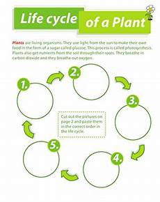 life cycle of a plant worksheet education com