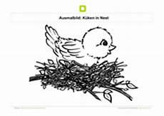 malvorlage vogel im nest ausmalbilder v 246 gel kostenlose ausmalbilder