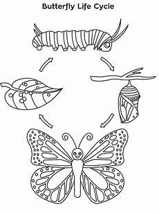 cycle of a butterfly coloring page free printable