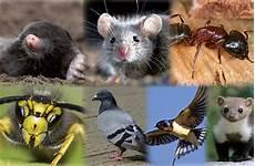 wie wird mäuse los luxprivat so werden sie diese plagegeister los