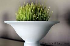using wheat grass for spring decor for less than 2