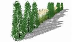 Hohe Sichtschutz Pflanzen - sichtschutzkombination mit s 228 ulenhainbuche und miscanthus