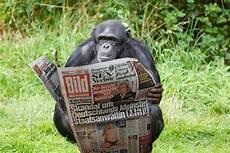Der Postillon Wissenschaftliche Sensation Schimpanse