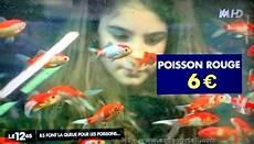 Les Prix Des Poissons Rouges En Animalerie Poisson