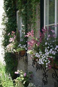 fioriere per davanzale finestra cottage window boxes for the home giardini di cagna