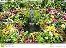 giardini in fiore foto visualizzazione fiore ai giardini di butchart immagine