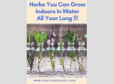 Herbs You Can Grow Indoors In Water All Year Long   Plants