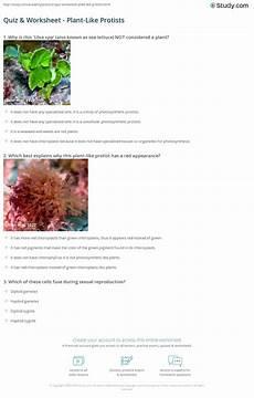 quiz worksheet plant like protists study com