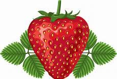 Mewarnai Gambar Buah Strawberry Gambar Mewarnai