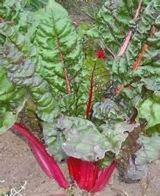 Semer Des Bettes Des Blettes Ou Des Poir 233 Es Jardiner
