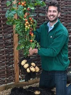 kartoffel tomaten pflanze tomtato potato and tomato by one plant science tech