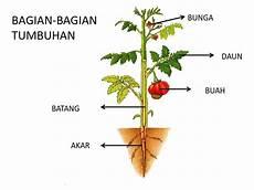 Belajar Cerdas Dan Praktis Bagian Tubuh Tumbuhan Dan