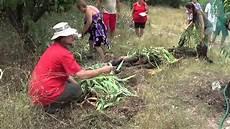 faire une butte permaculture une butte de culture