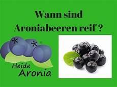 Wann Sind Johannisbeeren Reif - aronia rezepte aronia fruchtaufstrich und aronia marm
