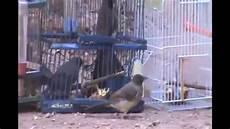 comment faire un pi 232 ge pour les oiseaux