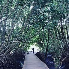 Pengunjung Melewati Jembatan Kayu Di Taman Hutan Rakyat