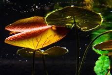 pflanzen unter wasser foto bild pflanzen pilze