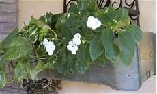 fioriere da davanzale fioriera in legno a roma modello davanzale