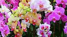 20 Gambar Foto Bunga Anggrek Yang Cantik Ayeey
